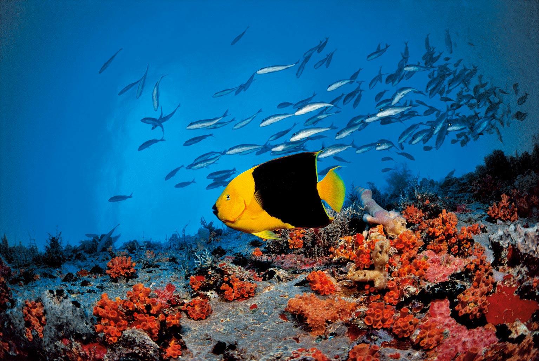 Schnorcheln mauritius Reisetageblog: Schön