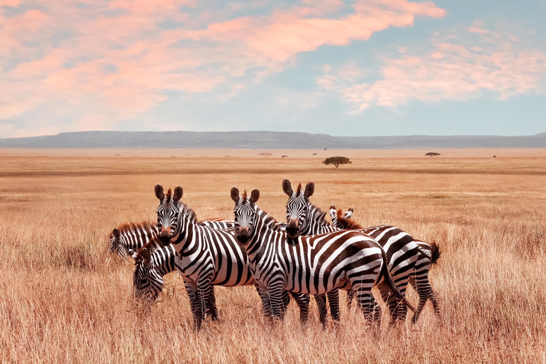 Safari in Kenia buchen   MEIERS WELTREISEN