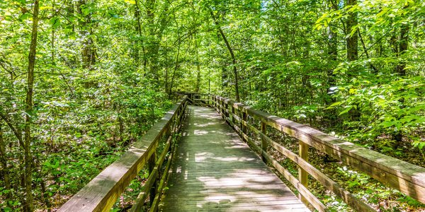 USA South Carolina Congaree Nationalpark