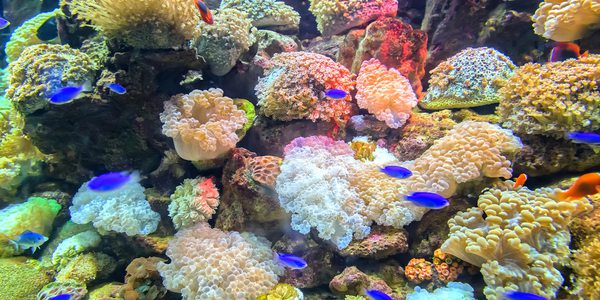 Australien Great Barrier Reef
