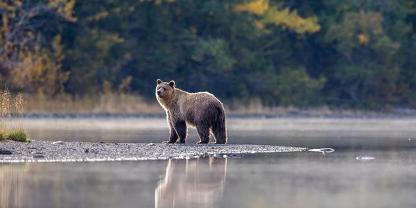 Kanada Bär Nationalpark